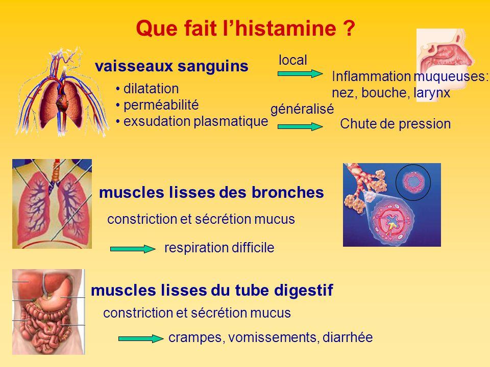 Que fait lhistamine ? dilatation perméabilité exsudation plasmatique vaisseaux sanguins muscles lisses du tube digestif constriction et sécrétion mucu