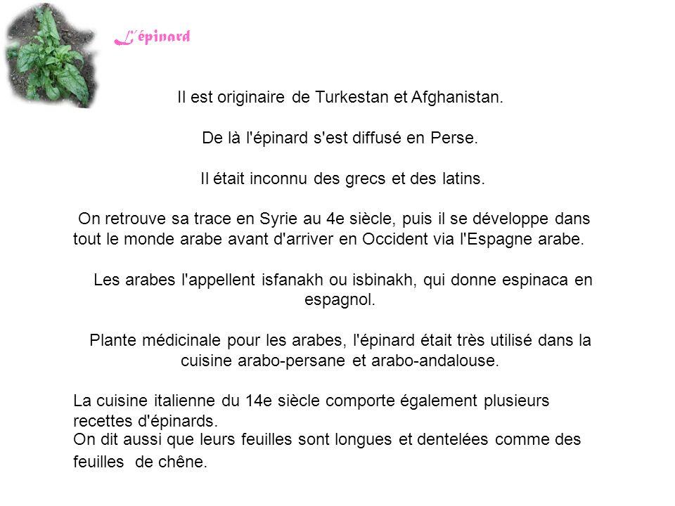 Il est originaire de Turkestan et Afghanistan. De là l'épinard s'est diffusé en Perse. Il était inconnu des grecs et des latins. On retrouve sa trace