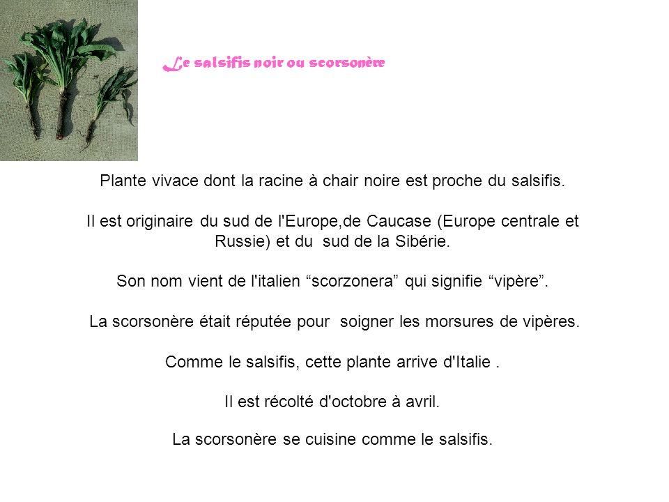 Le salsifis noir ou scorsonère Plante vivace dont la racine à chair noire est proche du salsifis. Il est originaire du sud de l'Europe,de Caucase (Eur