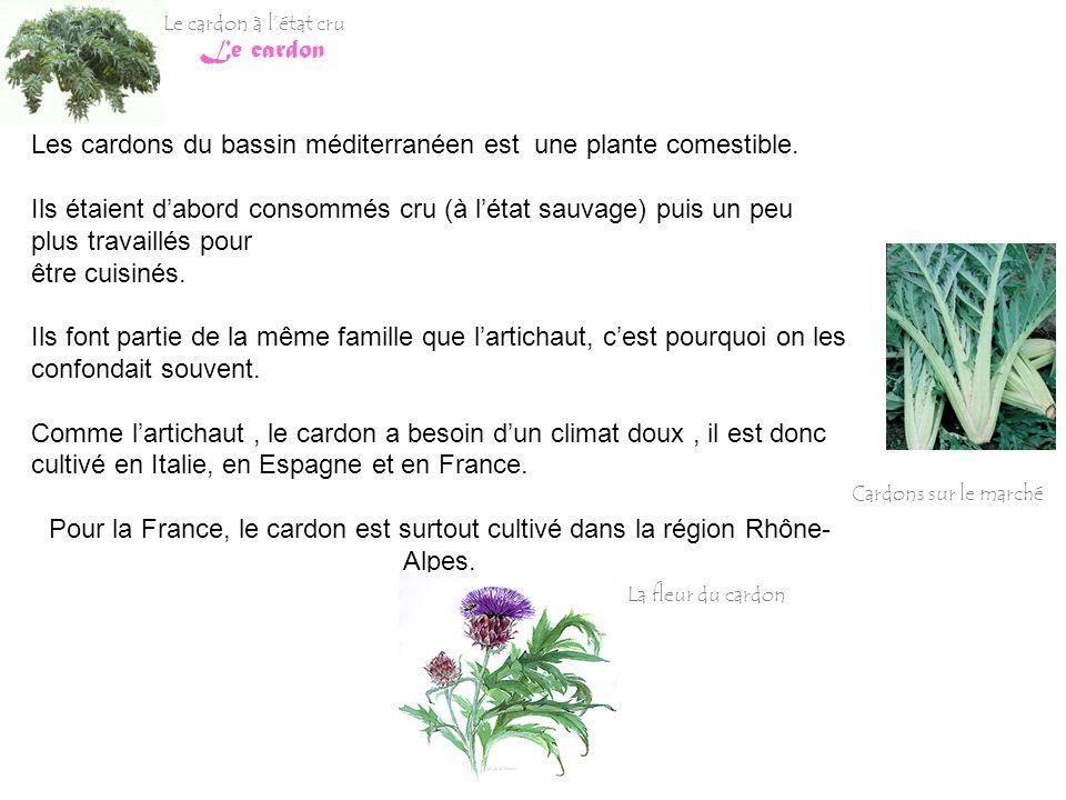 Le cardon Les cardons du bassin méditerranéen est une plante comestible. Ils étaient dabord consommés cru (à létat sauvage) puis un peu plus travaillé