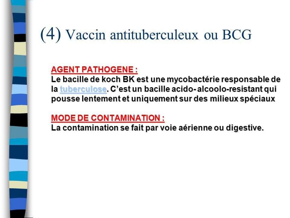 (4) Vaccin antituberculeux ou BCG AGENT PATHOGENE : Le bacille de koch BK est une mycobactérie responsable de la tuberculose. Cest un bacille acido- a