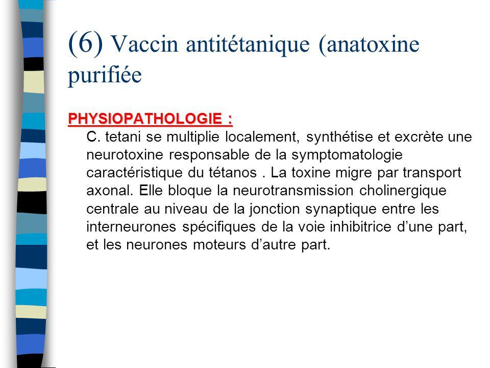 (6) Vaccin antitétanique (anatoxine purifiée PHYSIOPATHOLOGIE : PHYSIOPATHOLOGIE : C. tetani se multiplie localement, synthétise et excrète une neurot