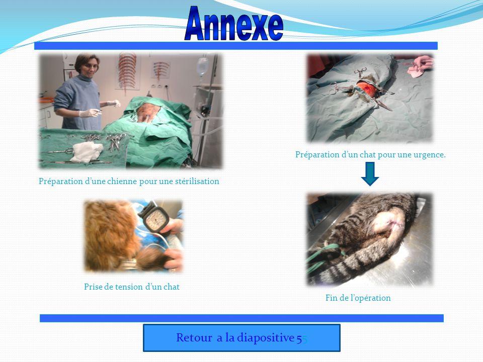 Retour a la diapositive 55 Préparation dune chienne pour une stérilisation Prise de tension dun chat Préparation dun chat pour une urgence. Fin de lop