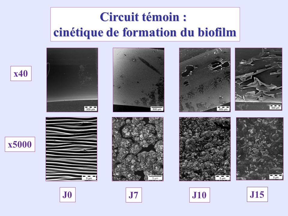 Circuit témoin : cinétique de formation du biofilm x40 x5000 J0 J7J10 J15