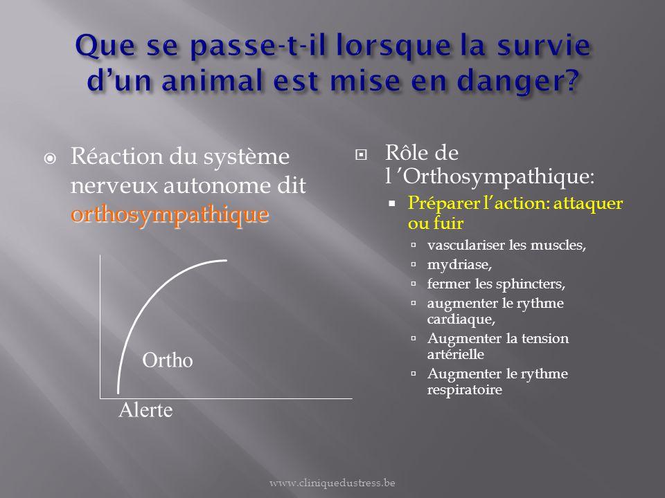 orthosympathique Réaction du système nerveux autonome dit orthosympathique Rôle de l Orthosympathique: Préparer laction: attaquer ou fuir vasculariser