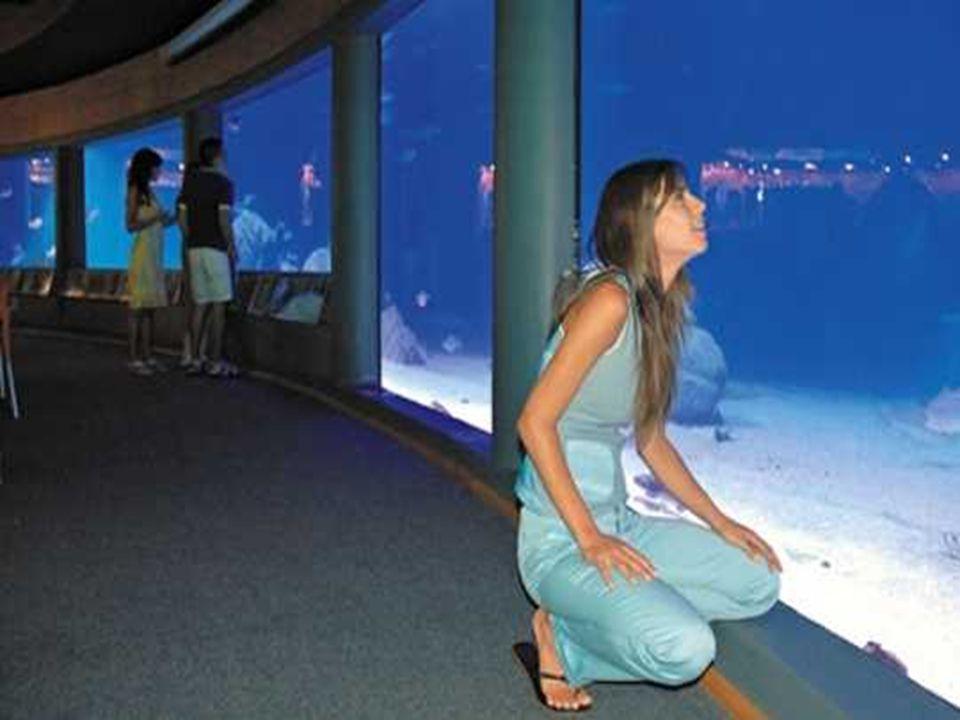 Pour le complexe touristique de San Alfonso del Mar, Fernando Fischmann n'a rien laissé au hasard. Le créateur de la piscine géante et promoteur des i