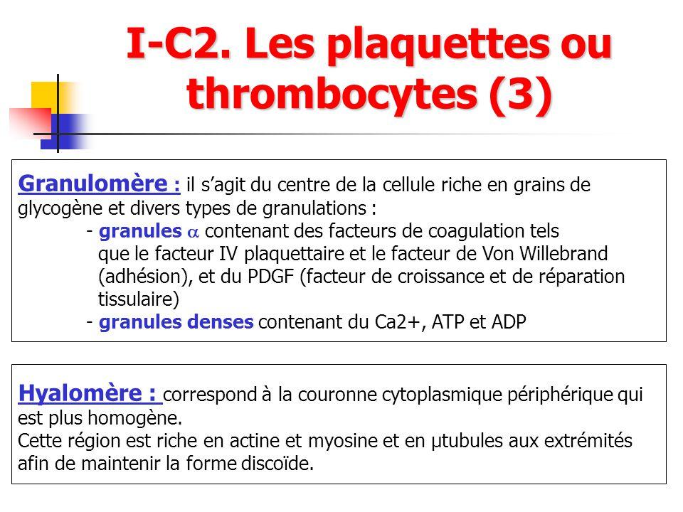 I-C2. Les plaquettes ou thrombocytes (3) Granulomère : il sagit du centre de la cellule riche en grains de glycogène et divers types de granulations :