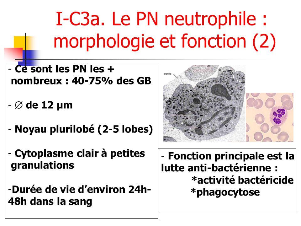 I-C3a. Le PN neutrophile : morphologie et fonction (2) - Ce sont les PN les + nombreux : 40-75% des GB - de 12 µm - Noyau plurilobé (2-5 lobes) - Cyto