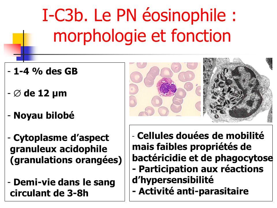 I-C3b. Le PN éosinophile : morphologie et fonction - 1-4 % des GB - de 12 µm - Noyau bilobé - Cytoplasme daspect granuleux acidophile (granulations or