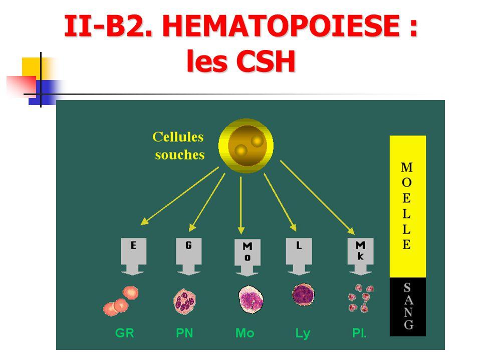 II-B2. HEMATOPOIESE : les CSH