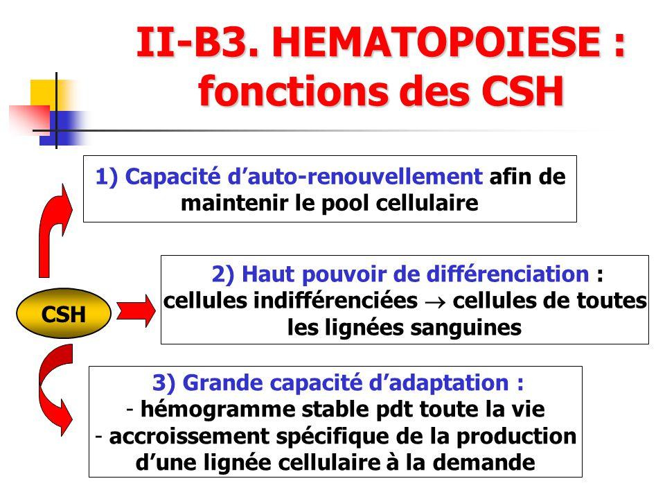 II-B3. HEMATOPOIESE : fonctions des CSH CSH 1) Capacité dauto-renouvellement afin de maintenir le pool cellulaire 2) Haut pouvoir de différenciation :