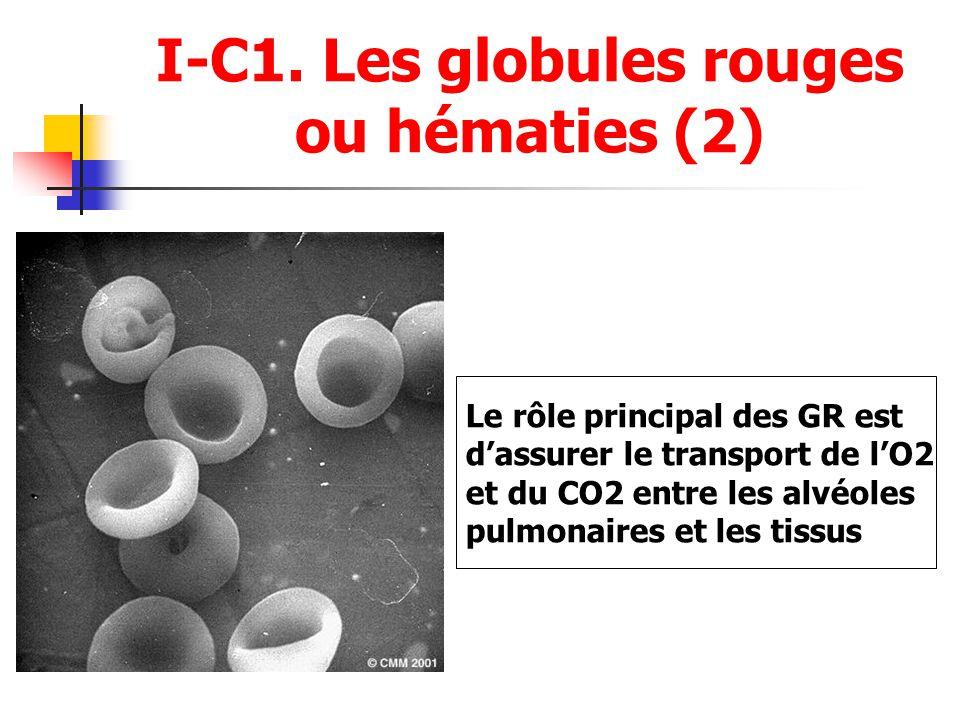I-C1. Les globules rouges ou hématies (2) Le rôle principal des GR est dassurer le transport de lO2 et du CO2 entre les alvéoles pulmonaires et les ti