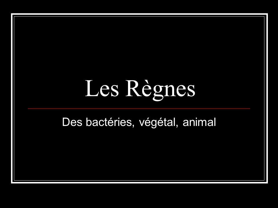 Les Règnes Des bactéries, végétal, animal