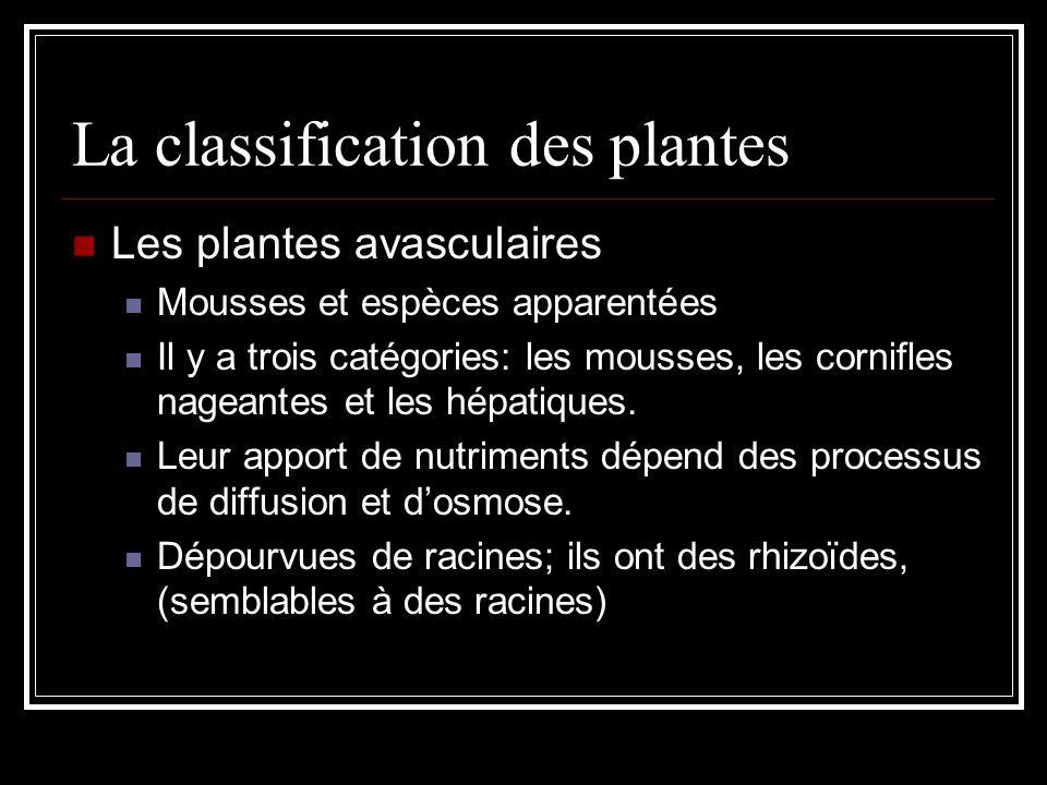 La classification des plantes Les plantes avasculaires Mousses et espèces apparentées Il y a trois catégories: les mousses, les cornifles nageantes et les hépatiques.