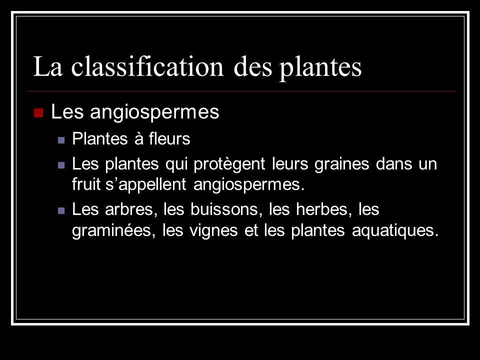 La classification des plantes Les angiospermes Plantes à fleurs Les plantes qui protègent leurs graines dans un fruit sappellent angiospermes.