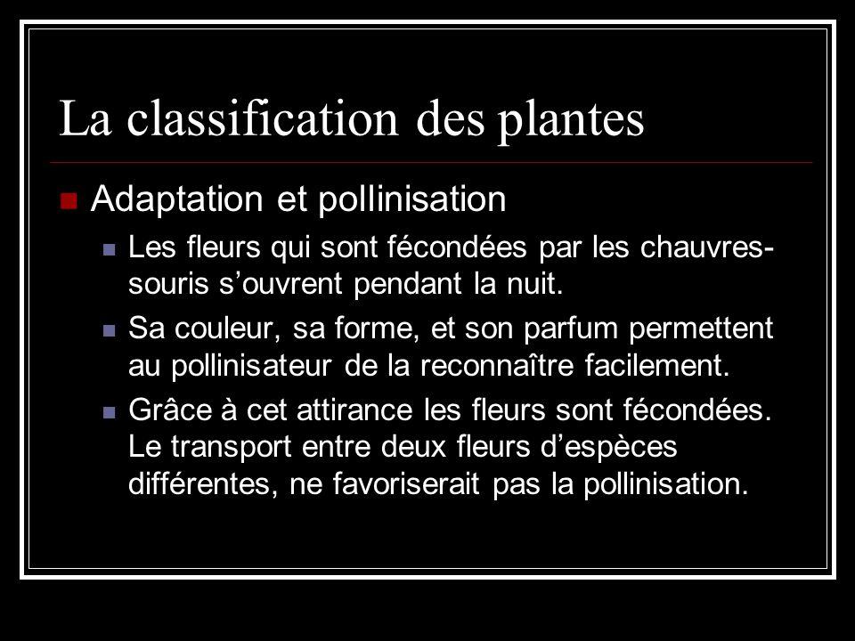 La classification des plantes Adaptation et pollinisation Les fleurs qui sont fécondées par les chauvres- souris souvrent pendant la nuit.