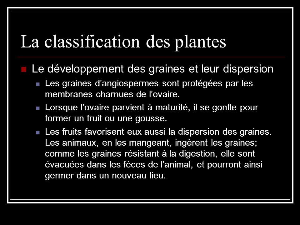 La classification des plantes Le développement des graines et leur dispersion Les graines dangiospermes sont protégées par les membranes charnues de lovaire.