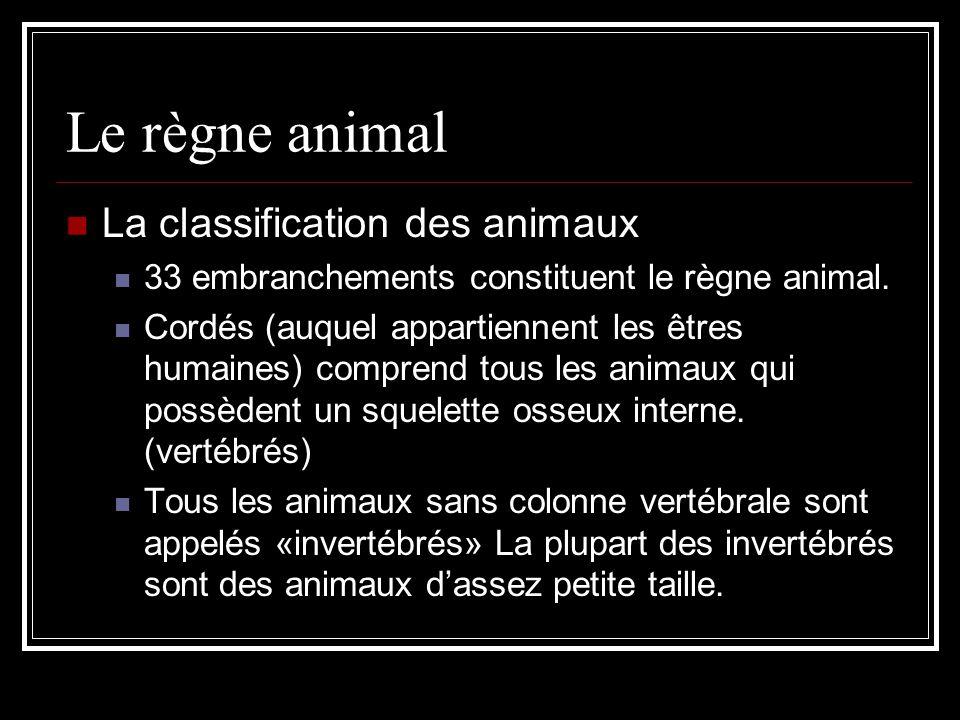 Le règne animal La classification des animaux 33 embranchements constituent le règne animal.