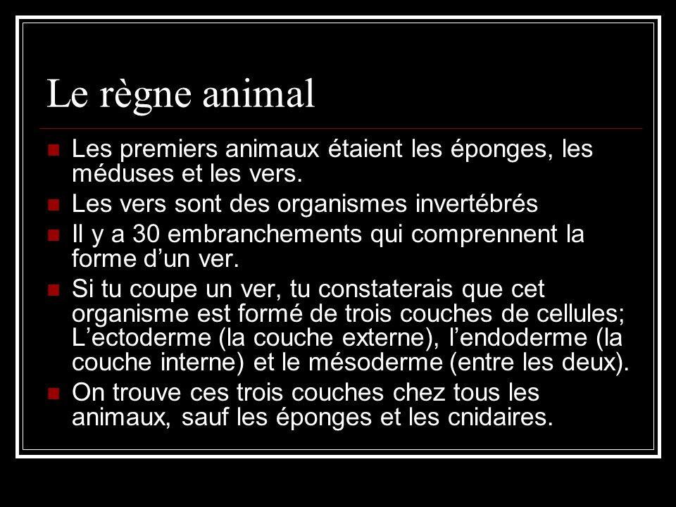 Le règne animal Les premiers animaux étaient les éponges, les méduses et les vers.
