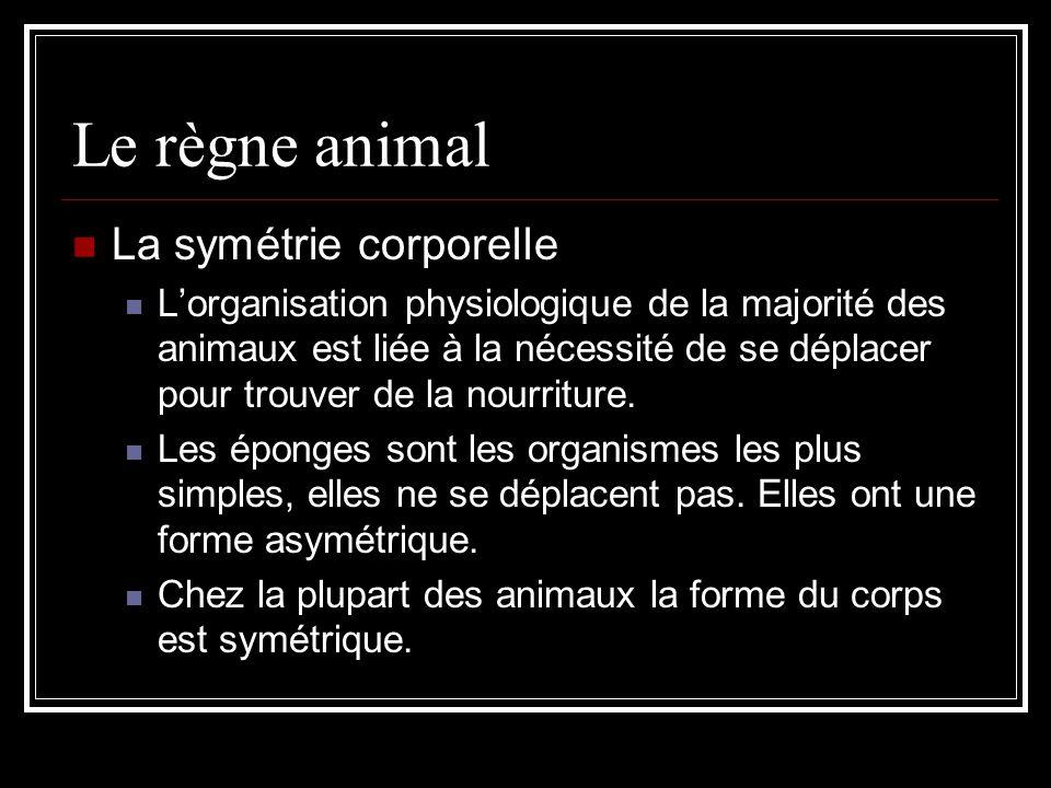 Le règne animal La symétrie corporelle Lorganisation physiologique de la majorité des animaux est liée à la nécessité de se déplacer pour trouver de la nourriture.
