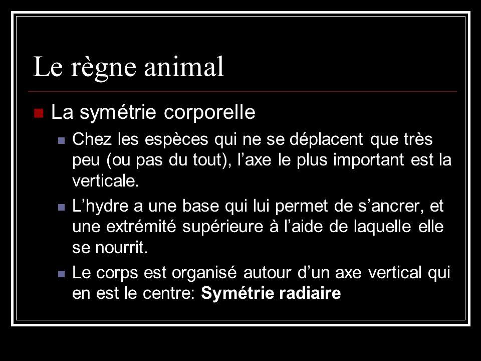 Le règne animal La symétrie corporelle Chez les espèces qui ne se déplacent que très peu (ou pas du tout), laxe le plus important est la verticale.