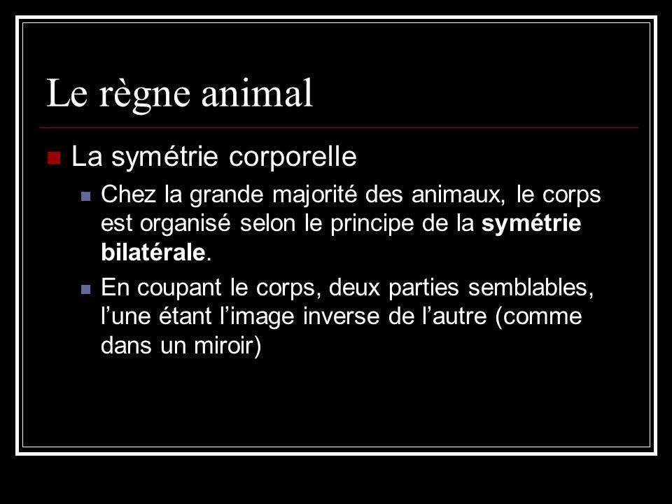 Le règne animal La symétrie corporelle Chez la grande majorité des animaux, le corps est organisé selon le principe de la symétrie bilatérale.
