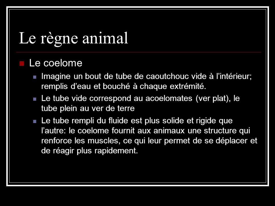 Le règne animal Le coelome Imagine un bout de tube de caoutchouc vide à lintérieur; remplis deau et bouché à chaque extrémité.