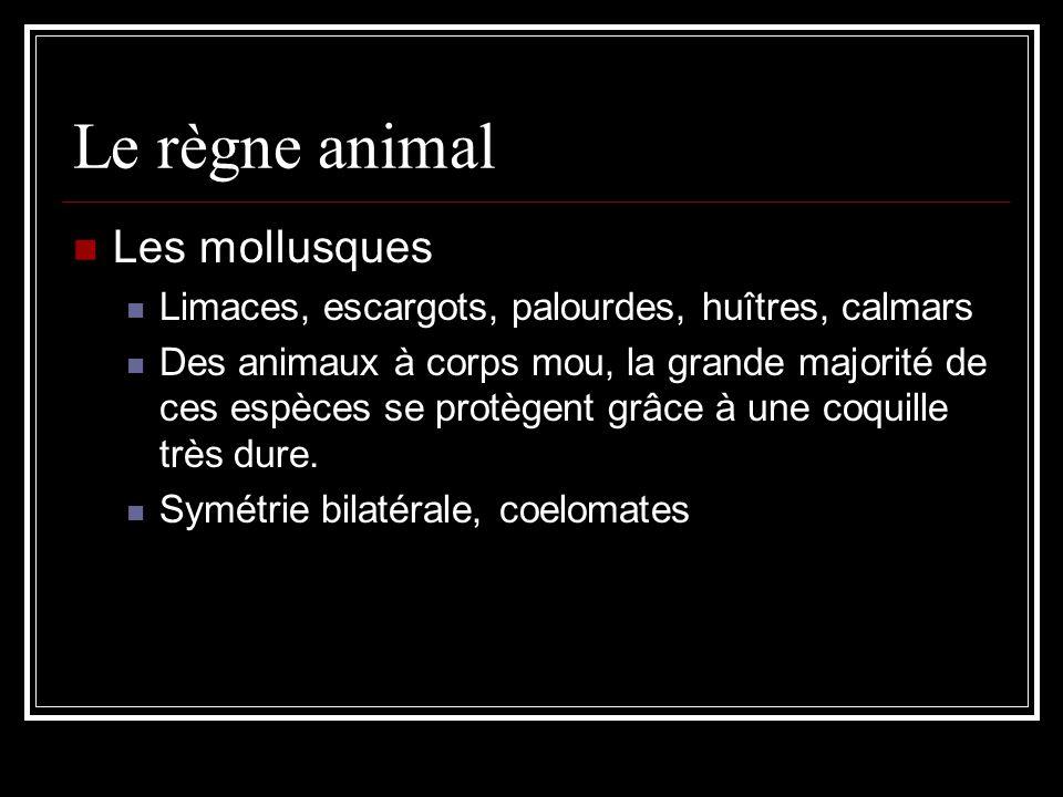 Le règne animal Les mollusques Limaces, escargots, palourdes, huîtres, calmars Des animaux à corps mou, la grande majorité de ces espèces se protègent grâce à une coquille très dure.