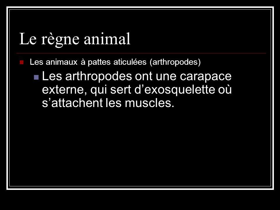 Le règne animal Les animaux à pattes aticulées (arthropodes) Les arthropodes ont une carapace externe, qui sert dexosquelette où sattachent les muscles.