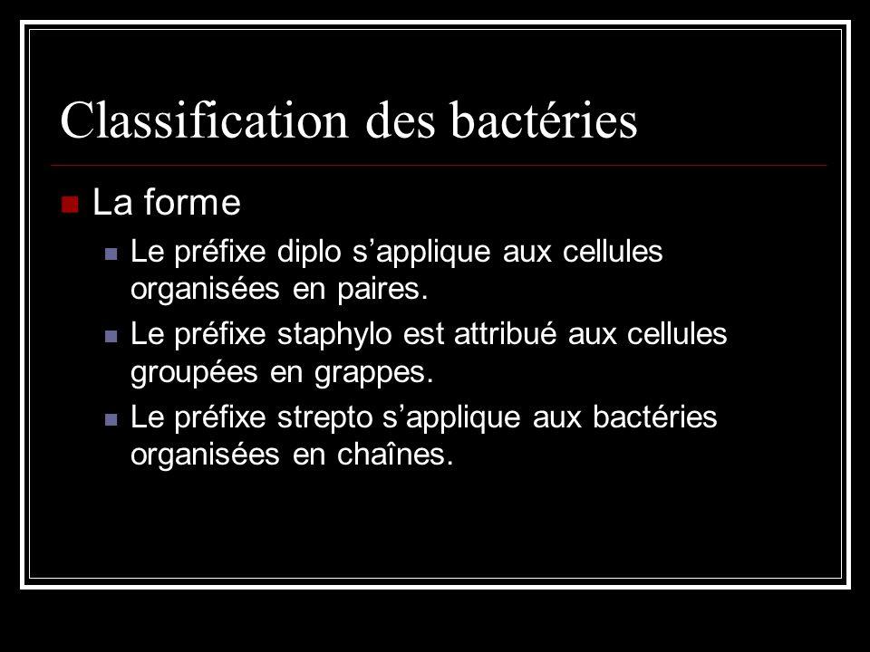 Classification des bactéries La forme Le préfixe diplo sapplique aux cellules organisées en paires.