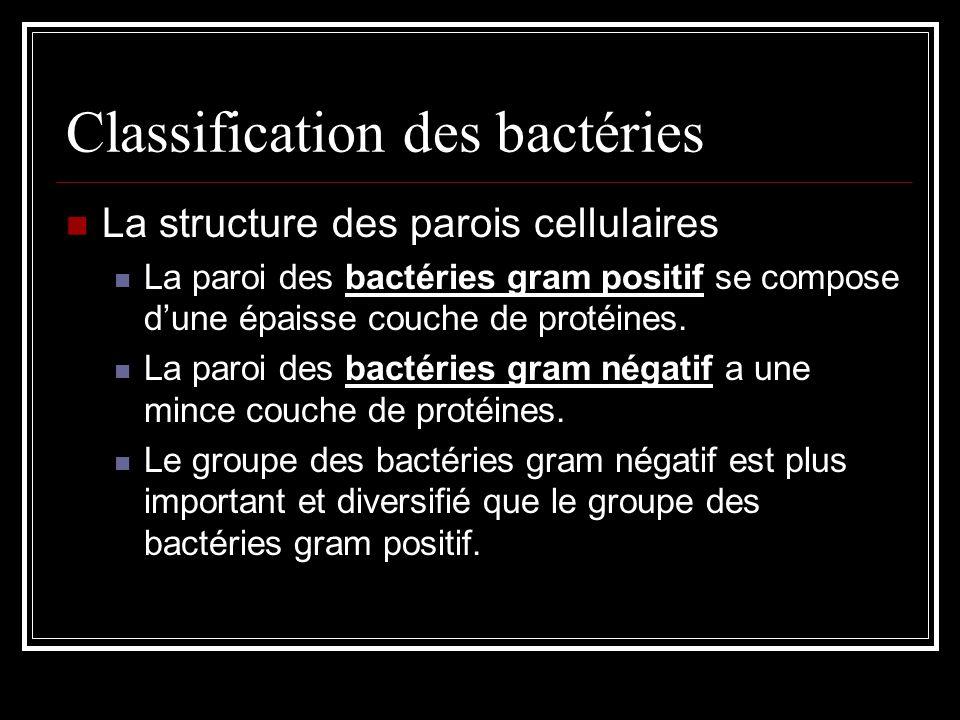 Classification des bactéries La structure des parois cellulaires La paroi des bactéries gram positif se compose dune épaisse couche de protéines.