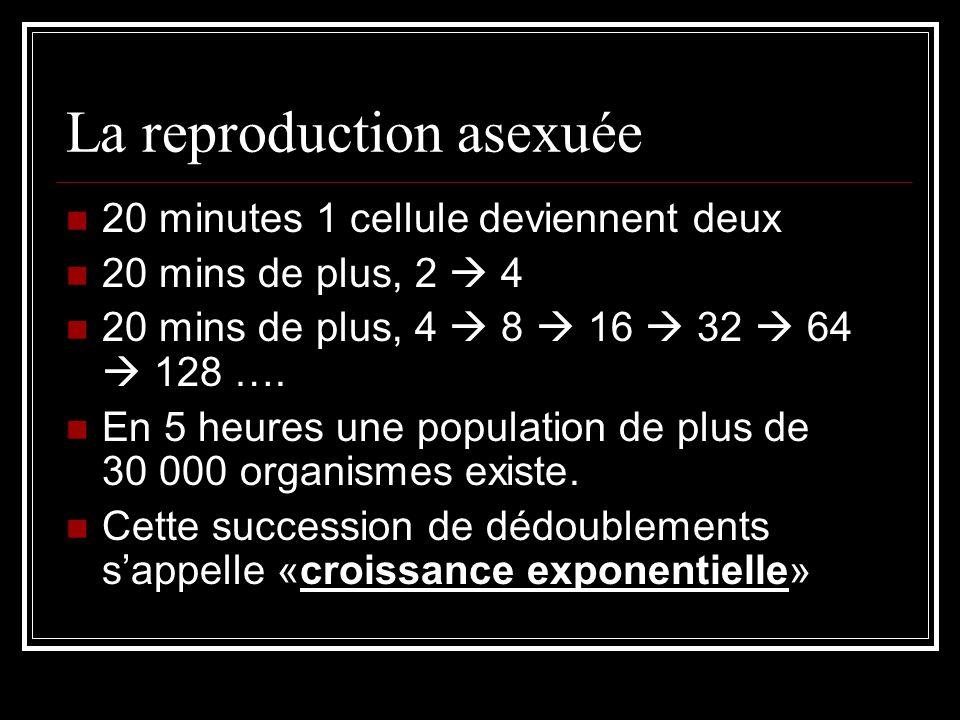 La reproduction asexuée 20 minutes 1 cellule deviennent deux 20 mins de plus, 2 4 20 mins de plus, 4 8 16 32 64 128 ….