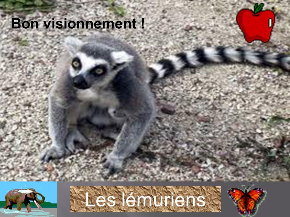 Savais-tu que les lémuriens de Madagascar figurent aujourd hui parmi les primates les plus menacés de la planète à cause de la destruction de leur habitat et du braconnage .