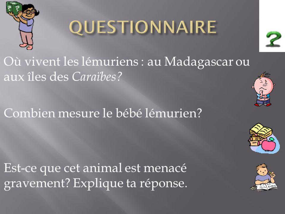 Réponses: Les lémuriens vivent à Madagascar.Le bébé lémurien mesure de 3 à 4 cm.