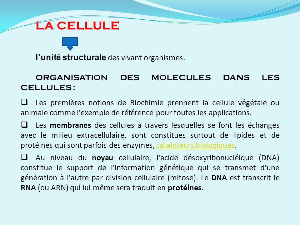 LA CELLULE lunité structurale des vivant organismes. ORGANISATION DES MOLECULES DANS LES CELLULES : Les premières notions de Biochimie prennent la cel