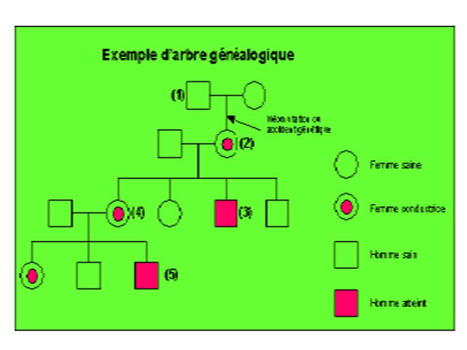 ANAMNESE Environnement socio familial Origine ethnique et géographique Contexte psychoaffectif et relationnel Comportement social Existence dune Épilepsie