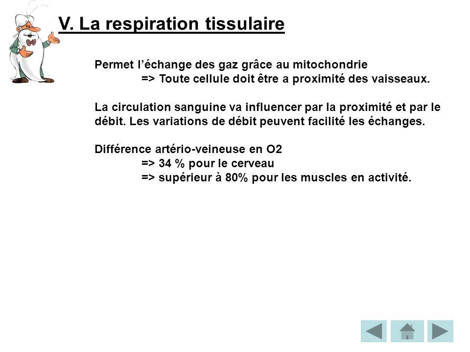 V. La respiration tissulaire Permet léchange des gaz grâce au mitochondrie => Toute cellule doit être a proximité des vaisseaux. La circulation sangui
