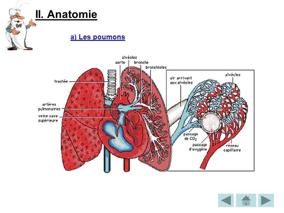 II. Anatomie a) Les poumons