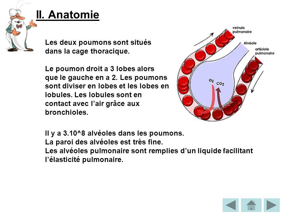 II.Anatomie Les deux poumons sont situés dans la cage thoracique.