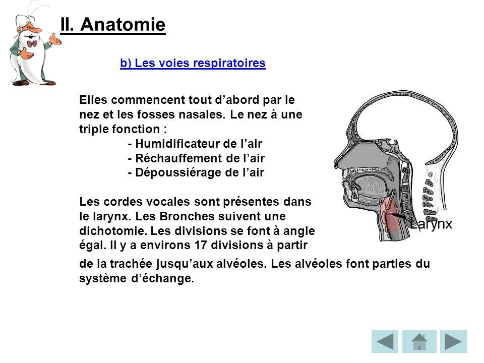 II. Anatomie b) Les voies respiratoires Elles commencent tout dabord par le nez et les fosses nasales. Le nez à une triple fonction : - Humidificateur