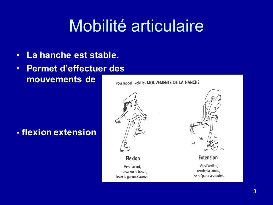 3 Mobilité articulaire La hanche est stable.