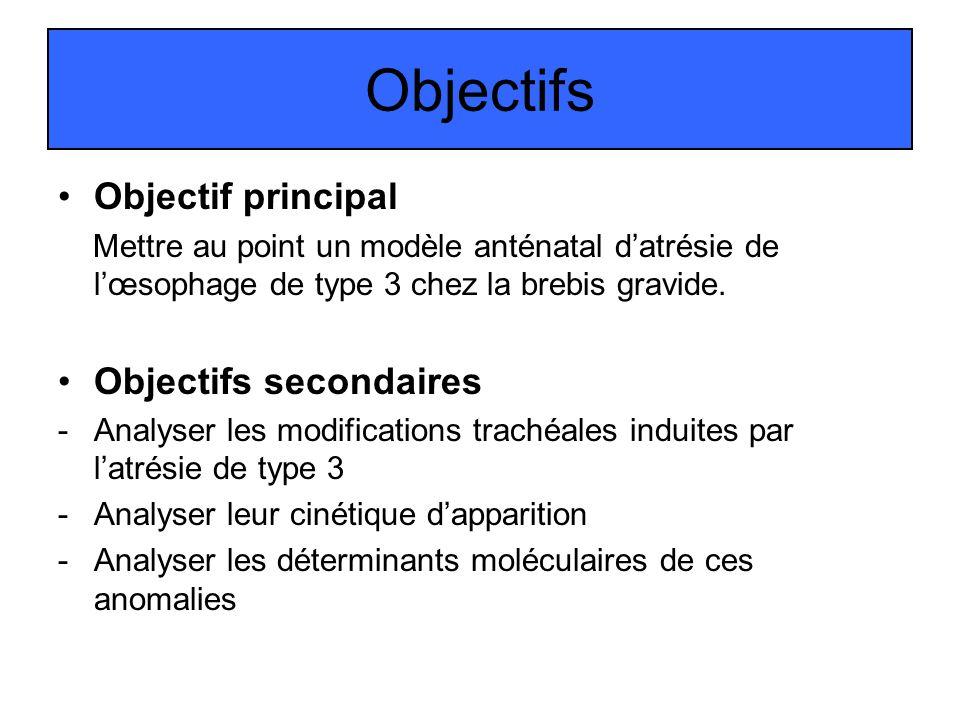 Objectifs Objectif principal Mettre au point un modèle anténatal datrésie de lœsophage de type 3 chez la brebis gravide. Objectifs secondaires -Analys