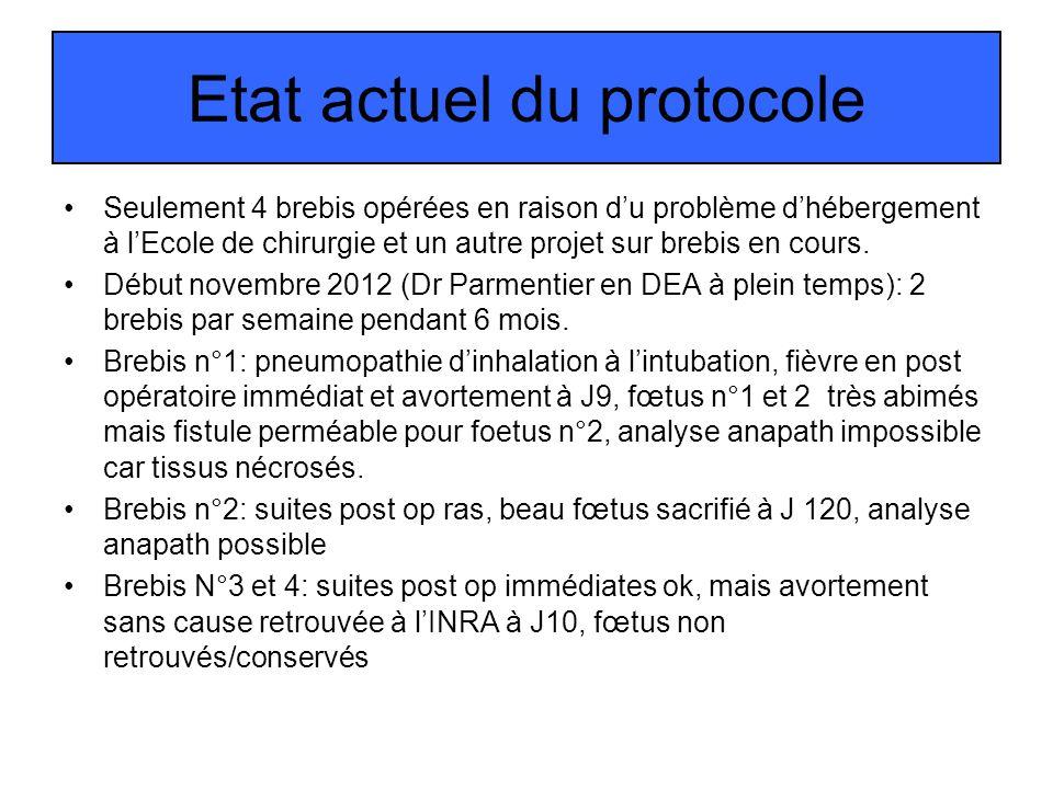Etat actuel du protocole Seulement 4 brebis opérées en raison du problème dhébergement à lEcole de chirurgie et un autre projet sur brebis en cours. D
