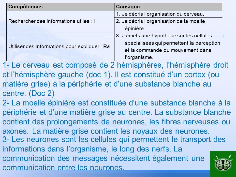 CompétencesConsigne : Rechercher des informations utiles : I 1. Je décris lorganisation du cerveau. 2. Je décris lorganisation de la moelle épinière.