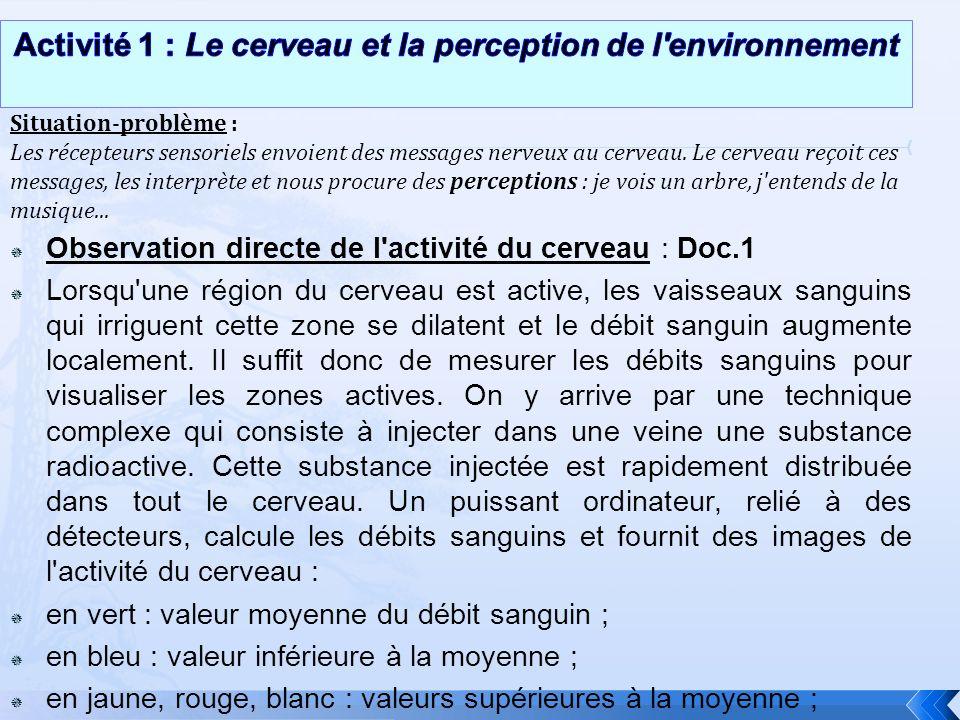 Observation directe de l'activité du cerveau : Doc.1 Lorsqu'une région du cerveau est active, les vaisseaux sanguins qui irriguent cette zone se dilat