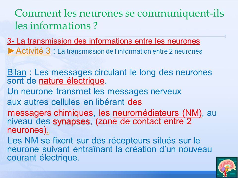 3- La transmission des informations entre les neurones Activité 3Activité 3 : La transmission de linformation entre 2 neurones Bilan : Les messages circulant le long des neurones sont de nature électrique.