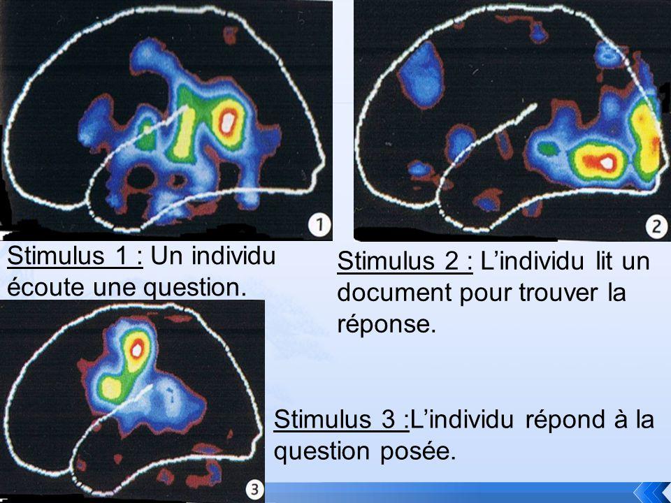 Stimulus 1 : Un individu écoute une question. Stimulus 2 : Lindividu lit un document pour trouver la réponse. Stimulus 3 :Lindividu répond à la questi