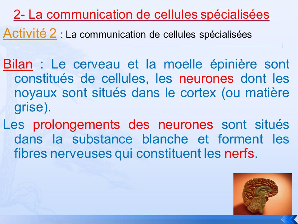 Activité 2Activité 2 : La communication de cellules spécialisées Bilan : Le cerveau et la moelle épinière sont constitués de cellules, les neurones dont les noyaux sont situés dans le cortex (ou matière grise).