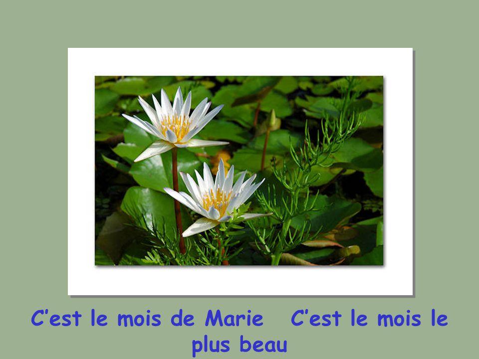 Cest le mois de Marie Cest le mois le plus beau