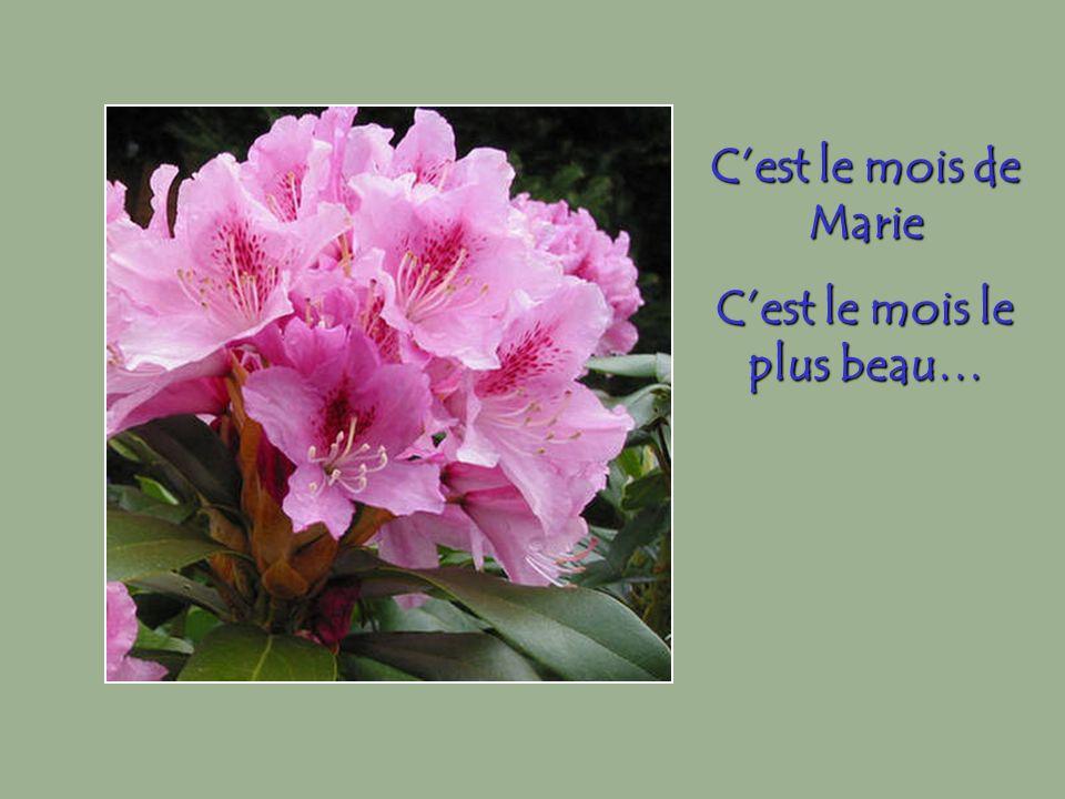 Cest le mois de Marie Cest le mois le plus beau…